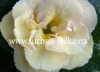 Achimenes `Yellow English Rose` (цветение в жару)